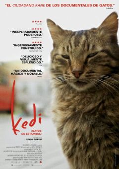 Kedi, Gatos de Estambul